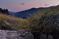 金色の夜明け - katsuのヘタッピ風景