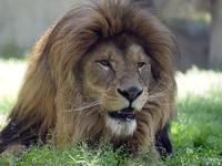 3か月ぶりの大森山動物園 - 動物園放浪記