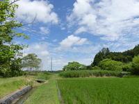 梅雨の白い花 - 千葉県いすみ環境と文化のさとセンター