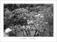 まだバラが咲く庭 - Minnenfoto