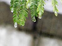 <雨>・・・梅雨の日 - 庭を眺めて…コーヒータイム