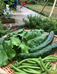 野菜を持って従姉宅へ行き気分転換 - 島暮らしのケセラセラ