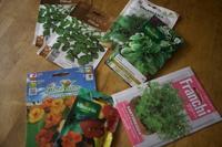 ポタジェを作る②:野菜の種まき(サマーセボリーなど) - 世話要らずの庭
