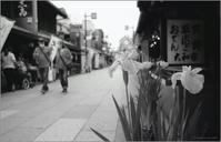 参道沿いの花 - 心のカメラ   more tomorrow than today ...