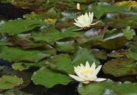 ☆湧永庭園のバラ Ⅵ☆ - できる限り心をこめて・・Ⅳ