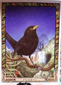 Animal cards*クロウタドリ*とビートルズ - 菫青石に天の川 小さな庭から地球を眺める