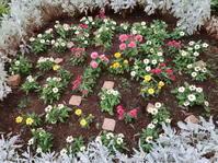 花あれこれ2020年6月中旬のマンション花壇 - ニッキーののんびり気まま暮らし