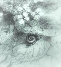 《紫陽花・・・蝸牛参上》 - 『ヤマセミの谿から・・・ある谷の記憶と追想』