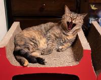 のどかなアクビと、なんだかすごいやつ - 猫と夕焼け