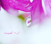 梅雨入り - カンパーニュママの一眼レフ生活とポメプーころすけと日々の出来事日記