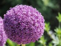 フラワーパークの花たち2 - 光の音色を聞きながら Ⅴ