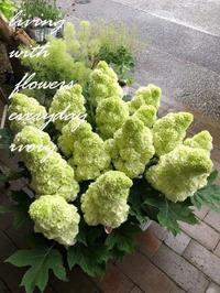 ハーモーニー -  Flower and cafe 花空間 ivory (アイボリー)