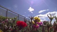 昭和懐古~絶滅危惧物・其の三~天空の楽園 - ティーアンドダブリューのスタッフブログ