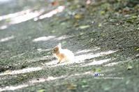 かわいい のうさぎの赤ちゃん - azure 自然散策 ~自然・季節・野鳥~