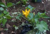 ダンゴ虫とワラジ虫 - 世話要らずの庭