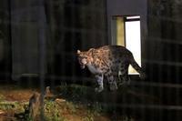 多摩動物公園サマーナイト2019⑤~動物たちは闇夜に動き出す - 続々・動物園ありマス。