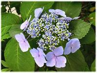 梅雨は植物の美しさが際立つとき - nazunaニッキ