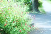 公園散歩で - jumhina biyori*