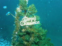 2012.12 江之浦 The 1st Dive - ランゲルハンス島の海