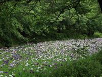 赤堀しょうぶ園 (2020/6/12撮影) - toshiさんのお気楽ブログ