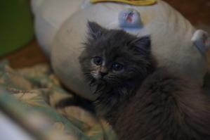 子猫の情景 - 不思議空間「遠野」 -「遠野物語」をwebせよ!-