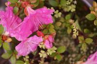 梅雨と庭に咲く花 - THE FL LENS WAKU WAKU Mark II