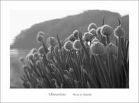 玉ねぎ - Minnenfoto