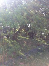 妖精、自然霊たちが、喜びいっぱいに表現できる時代がやってきました - イギリス ウェールズの自然なくらし