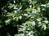 <梅雨>の晴れ間は蒸し暑い - 庭を眺めて…コーヒータイム