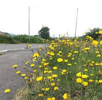 黄色い花♪  白い花♪ - 笑う門には福来たる