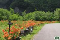 一の瀬つつじ園がオレンジ色になってきました! - 乗鞍高原カフェ&バー スプリングバンクの日記②