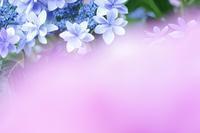 季節の花 - 薫の時の記憶