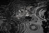 梅雨の波 - フォトな日々
