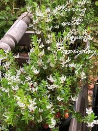 クランベリーの花 -  Flower and cafe 花空間 ivory (アイボリー)