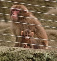 久しぶりの浜松市動物園 - 徒然日記