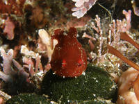 2013.05 福浦 The 1st Dive - ランゲルハンス島の海