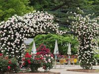 フラワーパークの薔薇7 - 光の音色を聞きながら Ⅴ
