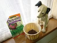 ブロッコリースプラウト 種まき - NATURALLY