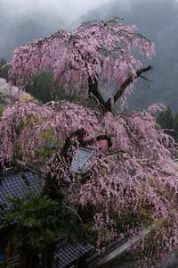 孤高の一本 - katsuのヘタッピ風景