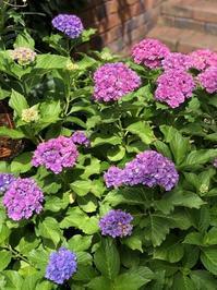 紫陽花の季節は、サマーカラーが溢れてる。 - サロン・ド・ブロッサム(パーソナルカラー診断&骨格スタイル分析、パーソナルスタイリストin広島)