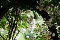 ☆湧永庭園のバラ Ⅶ☆ - できる限り心をこめて・・Ⅳ