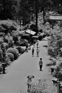 三室戸寺…③ - Taro's Photo
