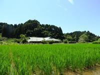 夏に向かって - 千葉県いすみ環境と文化のさとセンター