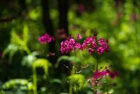 美し森風景 - オーナーズブログ・八ケ岳南麓は晴れています!