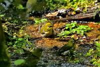 みちのく小鳥達14 - みちのくの大自然