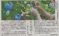 各新聞社にて、三室戸寺のハートマークあじさいが紹介 - 【飴屋通信】 京都の飴工房「岩井製菓」のブログ