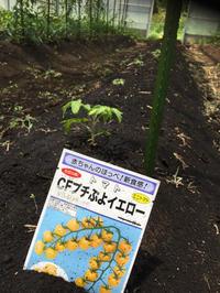 フレーフレー黄組❗️ - 富士のふもとの農業日誌