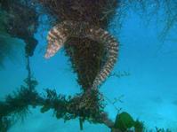 2013.05 福浦 The 2nd Dive - ランゲルハンス島の海