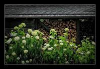 薪置き場に咲く - Desire