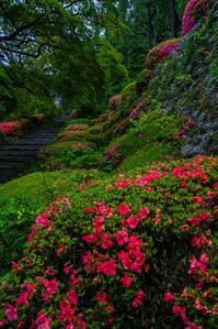 善峯寺の紫陽花とサツキ - 鏡花水月